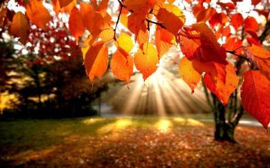 Thankfulness 2 11.23.2016.jpg