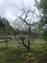 Blog pic. apple