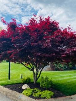 Spring tree pic